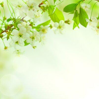 Фотообои Зеленые листья, красивый фон природа