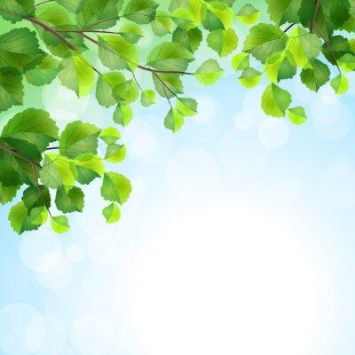 Фотообои Зеленые листья фон ветви деревьев вектор