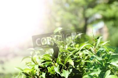 Фотообои Зеленый куст с свежими листьями, на открытом воздухе