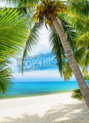 Фотообои Зеленое дерево на белом песчаном пляже