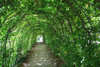 Фотообои Зеленый тоннель в саду