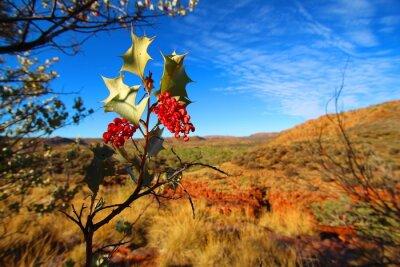Фотообои Гревиллея wickhamii в Trephina ущелье, Австралия