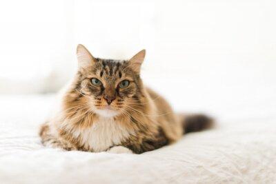 Фотообои Серый кот, лежа на кровати