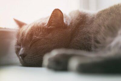Фотообои серый кот спит на окне, марочные тонированное