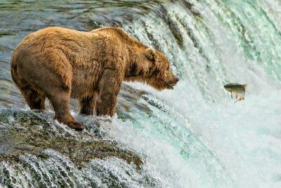 Фотообои Grizzly Bear Katmai Национальный парк Аляски