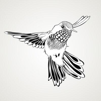 Фотообои Ручной обращается летающих колибри винтажном стиле.