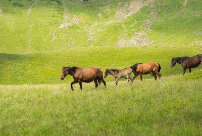 Фотообои Табун лошадей, идущих вдоль горного луга