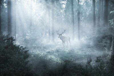 Фотообои Hirsch im nebeligen Wald