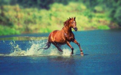Фотообои лошадь