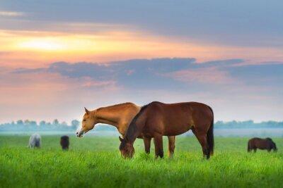 Фотообои Табун лошадей на пастбище в SunRize