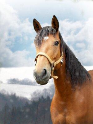 Фотообои Лошадь в зимний период