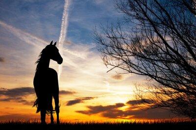 Фотообои силуэт лошади на закате