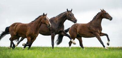Фотообои Лошади скачут в поле