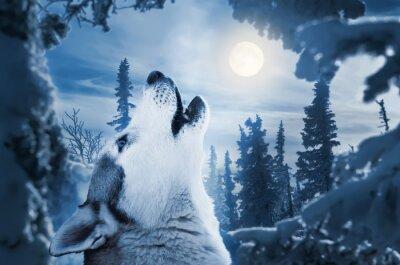 Фотообои howling to the moon