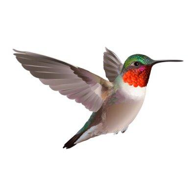 Фотообои Колибри - Colubris archilocus. Ручной обращается векторные иллюстрации на белом фоне летящего Рубин-troathed колибри с красочными глянцевой оперением.