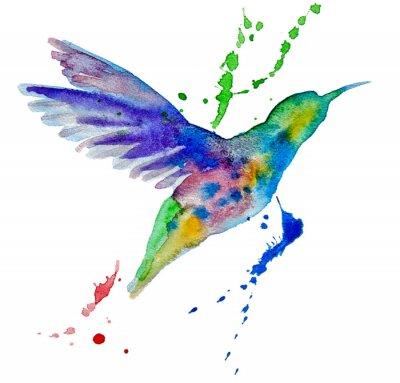 Фотообои колибри разноцветные на белом фоне