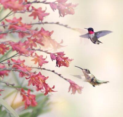 Фотообои Колибри и красные цветы
