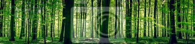 Фотообои Идиллия лес в весеннее время