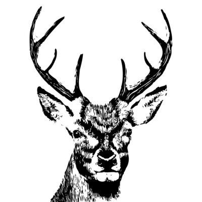 Фотообои иллюстрация голова оленя, гранж, силуэт, изолированных на белом