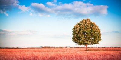 Фотообои Изолированные дерево в Тоскане Уитфилд - (Тоскана - Италия) - Тонированное изображение с копией пространства