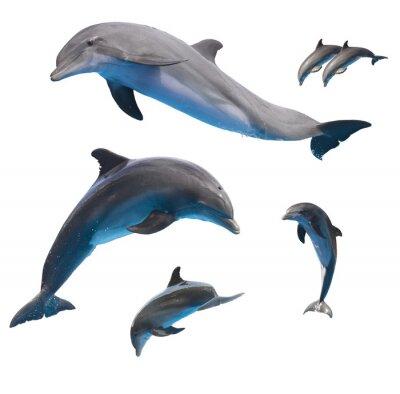 Фотообои прыжки дельфинов на белом