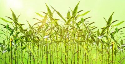Фотообои Junge Bambuspflanzen VOR grünem Hintergrund