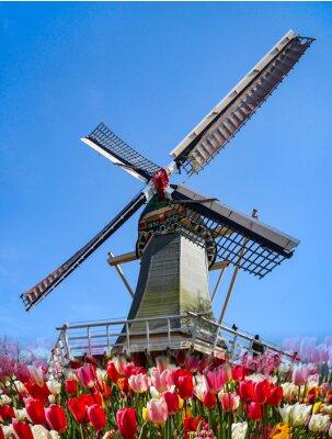 Фотообои Кекенхоф - Голландия