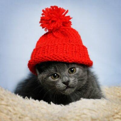 Фотообои котенок в красной шляпе