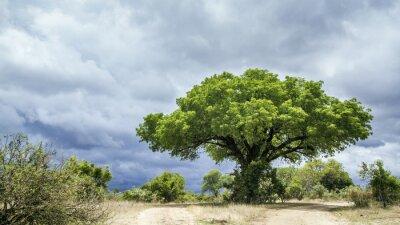 Фотообои Национальный парк Крюгера пейзаж, Южная Африка
