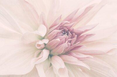 Фотообои Kwiat ze ślubnego bukietu, delikatne płatki, ujęcie macro.