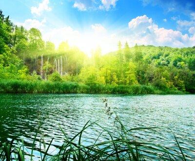 Фотообои озеро в глухом лесу