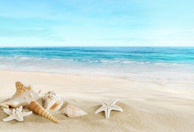 Фотообои Пейзаж с оболочек на тропическом пляже