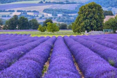 Фотообои Lavander поля в Провансе