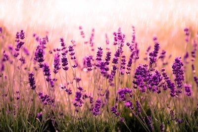 Фотообои Lavendelfeld гниль