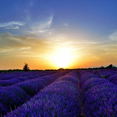 Фотообои Lavender field