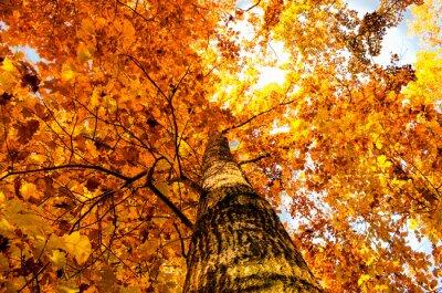 Фотообои лист желтый