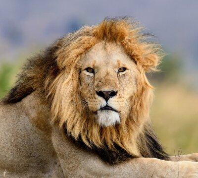 Фотообои лев
