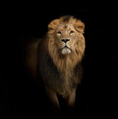 Фотообои Лев портрет на черном