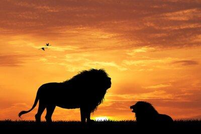 Фотообои лев силуэт на закате