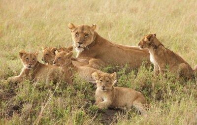 Фотообои Маленькие львята расслабляющий