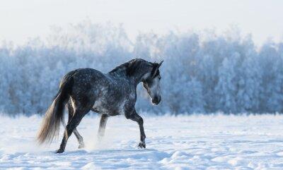 Фотообои Одинокий лошадь ходит по полю