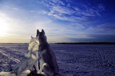 Фотообои любители - две собаки встретить закат