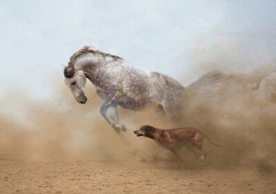 Фотообои Lusitanian лошадь