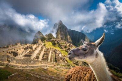 Фотообои Мачу-Пикчу, в список Всемирного наследия ЮНЕСКО. Одна из новых семи W