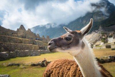 Фотообои Мачу-Пикчу, в список Всемирного наследия ЮНЕСКО. Одним из новых семи чудес света