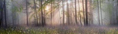 Фотообои Магия карпатского леса на рассвете