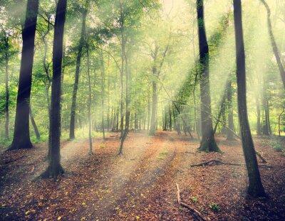 Фотообои волшебный лес в мисте с солнечным лучом
