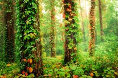 Фотообои Волшебный лес с стволами, обвитыми разноцветными лазаньями