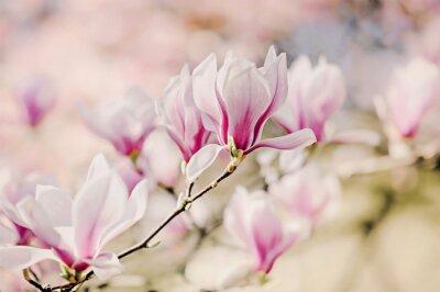 Фотообои Magnolienblüten