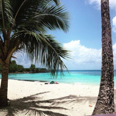 Фотообои Мартиника